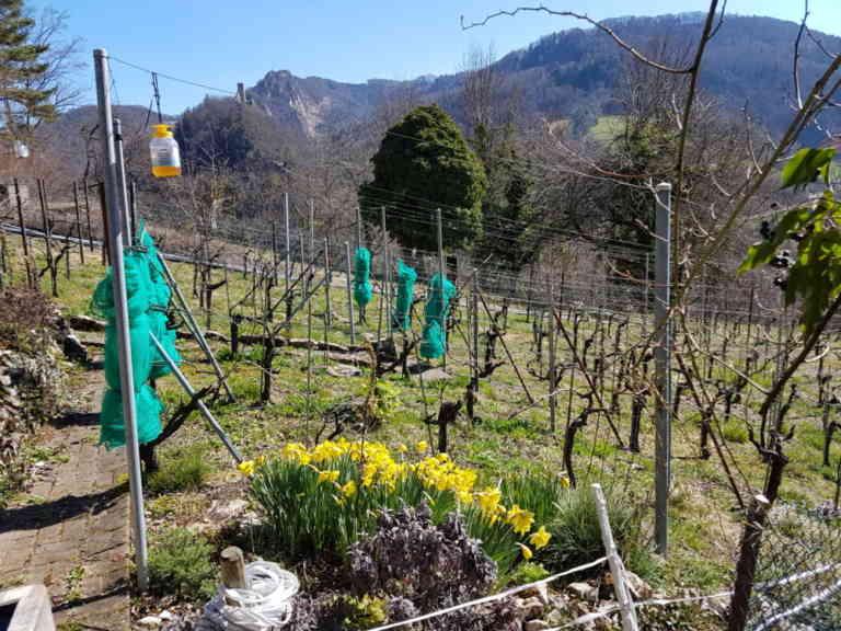 Wein Feer | KMU Angebot Baselland, #corona