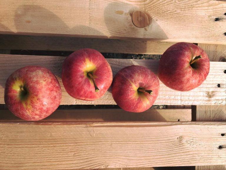 Öpfelegge Obstbau Salathé | KMU Angebot Baselland, #corona
