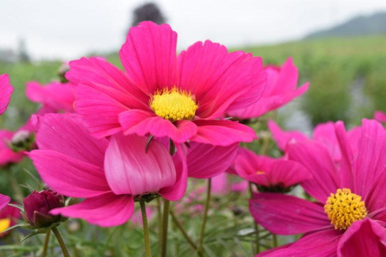 Blütenpracht.ch | KMU Angebot Baselland, #corona