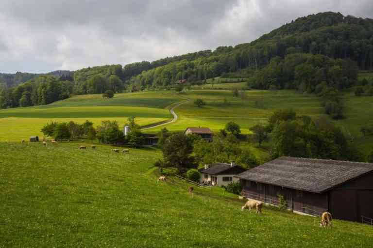 Biohof Engelsrütti | KMU Angebot Baselland, #corona