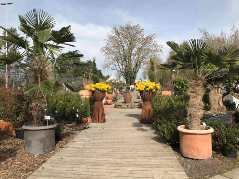Vivero Pflanzen-Paradies | KMU Angebot Baselland, #corona